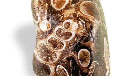 L'Agate à Fossiles, pour le contact avec les ressources cachées.